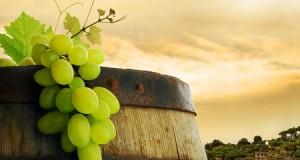 Los mejores vinos del 2013