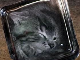 Gato bonsái